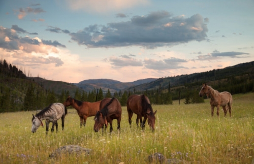 horses, yellowstone national park, unbranded