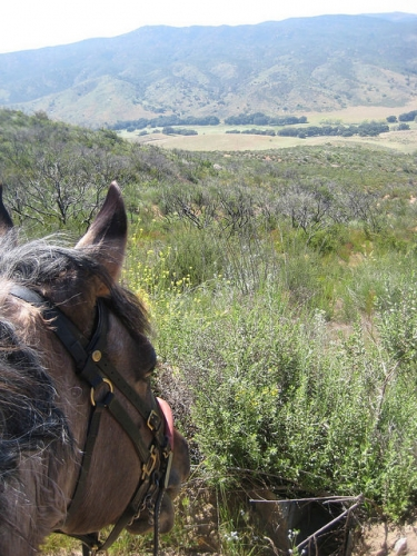 natrc, trail riding, mustang, horse