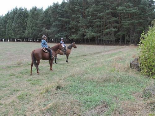 Nancy Brown, Dream Ridge Stables, horse
