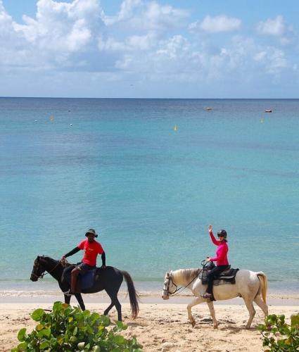 nancy d brown, nancy brown, horseback riding vacation, caribbean