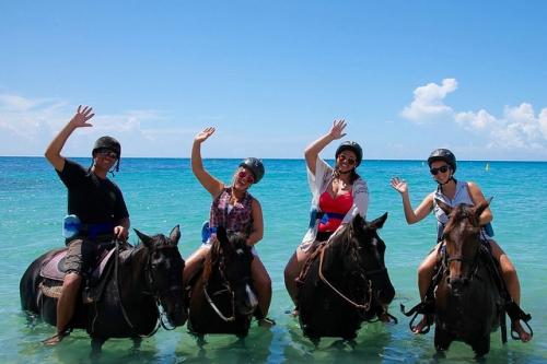 horseback riding, beach ride, swimming with horses