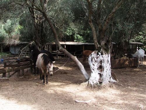 corfu, greece, horseback riding
