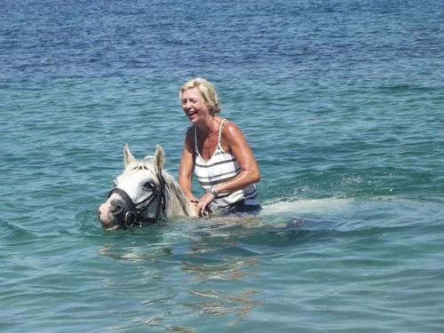 horse, corfu, greece