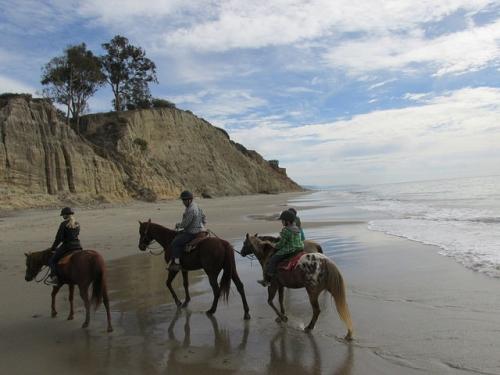 trail ride, beach ride, horseback ride