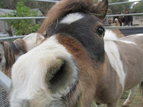 horses, pony, santa barbara horseback riding