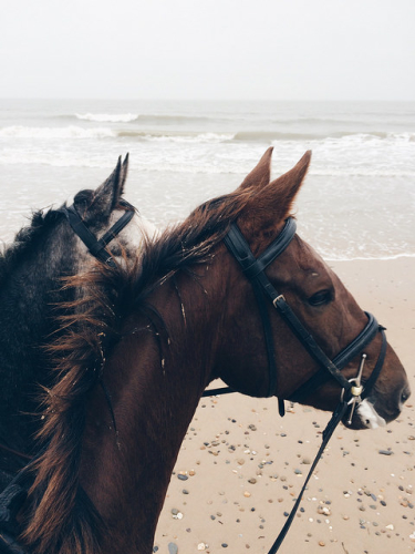 beach riding, dingle, county kerry, horseback riding