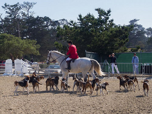 Horse Hound Derby Day Pebble Beach Equestrian Center Monterey Symphony