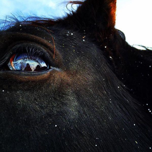 horse, alix crittenden, horse eye, bondurant, wyoming