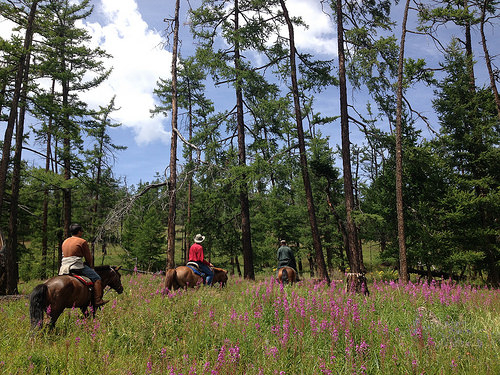 mongolia, mongolian forest, national geographic expeditions, mongolian horse trek, horseback riding vacation
