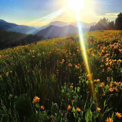 wyoming wildflowers, garden creek ridge, wyoming