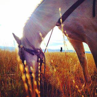 bondurant, wyoming, horse, Bridger Teton National Forest