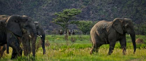 safari horseback riding vacation, safari on horseback, south africa riding holiday