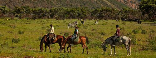 safari horses, south africa,