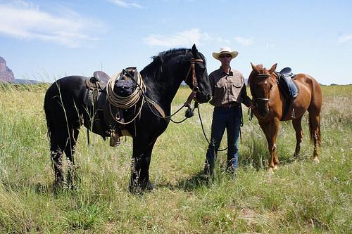 paul rogers, natural horsemanship, horse