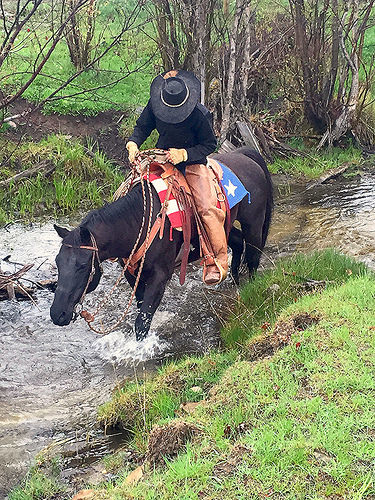 dustin call, paws up ranch, the resort at paws up, horseback riding, trail ride, cattle drive, greenough, montana
