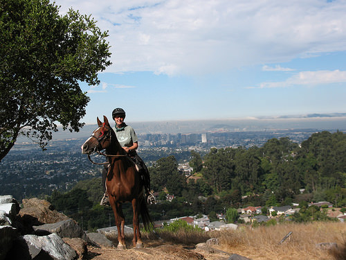 bishop's walk, horseback riding, east bay hills trails ride, trail ride, california