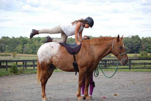 horse yoga, equine yoga, equestrian yoga, yoga on horseback, horse