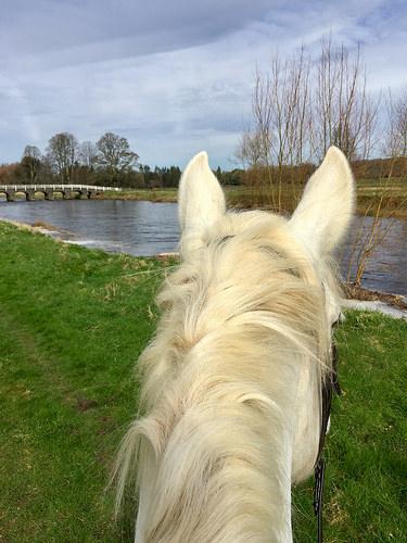 between two ears, life between the ears, horse riding mount juliet, irish draft horse, river nor, ireland