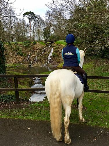 waterfall, kilkenny riding holiday, mount juliet equestrian centre, irish draft horse
