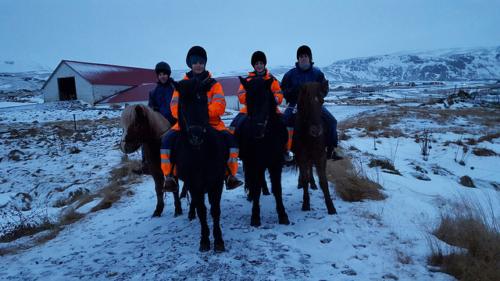 icelandic horse riding, icelandic horseback riding, icelandic pony ride, horse, iceland