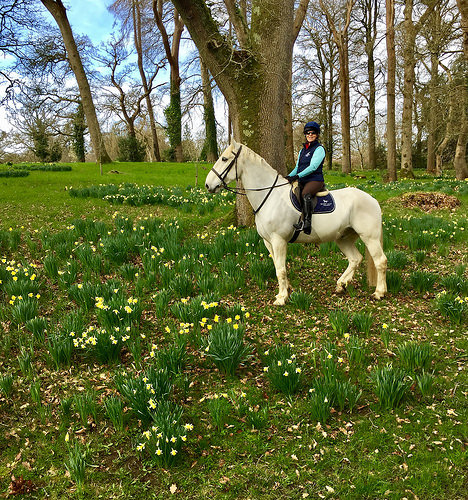 nancy d brown, mount juliet horse riding, mount juliet equestrian centre, horse riding kilkenny