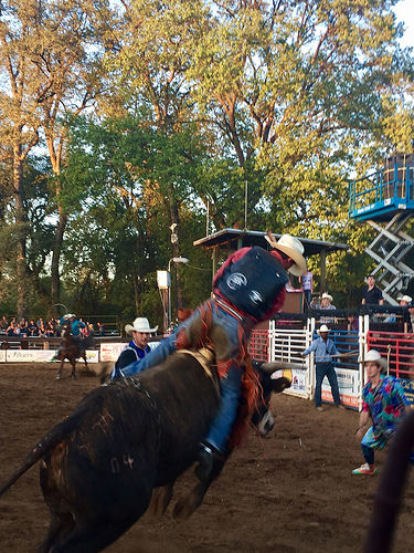 cowboy, bull rider, penn valley rodeo, penn valley, california, rodeo