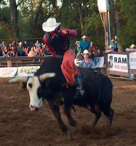bull rider, penn valley rodeo, cowboy, penn valley rodeo