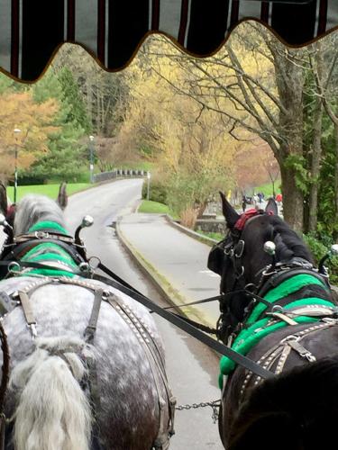 grit & percy, percheron horses, stanley park horse drawn tours, stanley park tours, vancouver, british columbia, canada