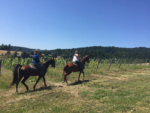 horseback riding near forest grove, nancy d brown, horse riding at plum hill vineyards, bella rue's stables, oregon