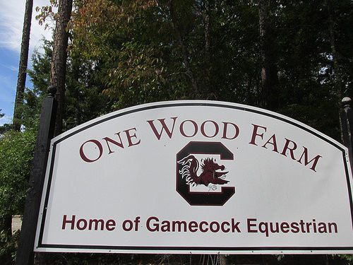one wood farm, gamecock equestrian, university of south carolina, blythwood, horse farm