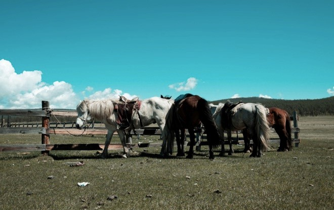 mongolian horses, khuvsgul lake, mongolia riding holiday