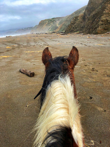 horse, manchester beach, mendocino coast, california, ross ranch