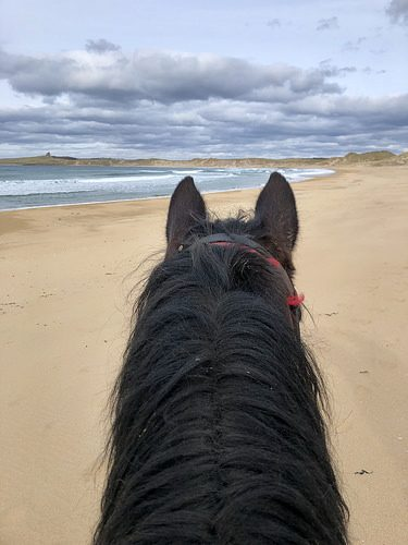 between the ears, horseback ride, island view riding stables, donegal bay, county sligo, ireland