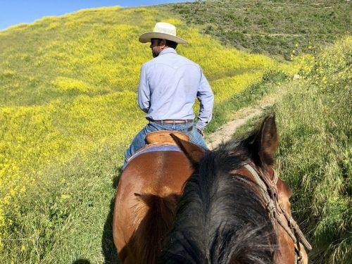 brian hallett, central coast trail rides, pismo preserve, horseback riding, trail ride, pismo beach, california, central coast horse ride, writing horseback