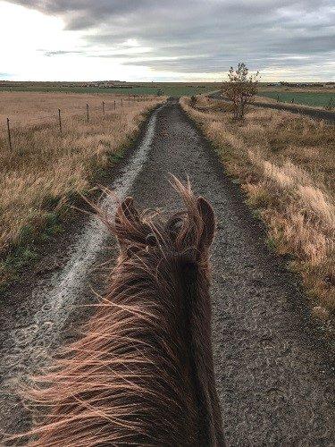 icelandic horse, eldhestar, horseback riding, reykjavik, iceland