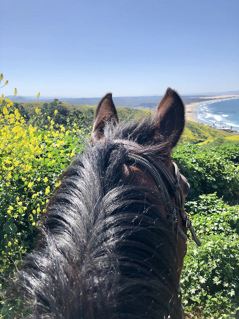 horse, horseback riding, central coast trail rides, pismo preserve, pismo beach, california, central coast wine country