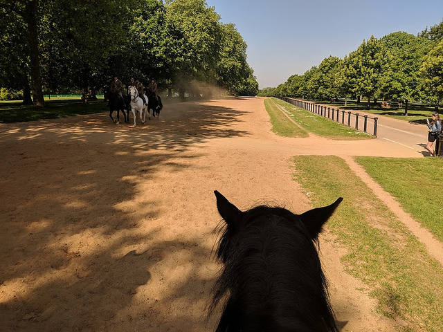 horseback riding rotten row, hyde park horse riding, horse riding in centrallondon