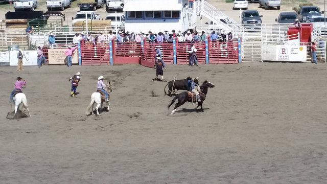 ely nevada white pine horse races, ely nevada white pine rodeo, white pine county fairgrounds, ely nevada, horse rodeo nevada