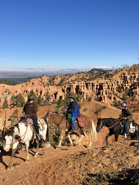 nancy d brown, equestrian travel expert nancy brown, rubys horseback adventures, bryce canyon horse rides, southern utah horseback riding