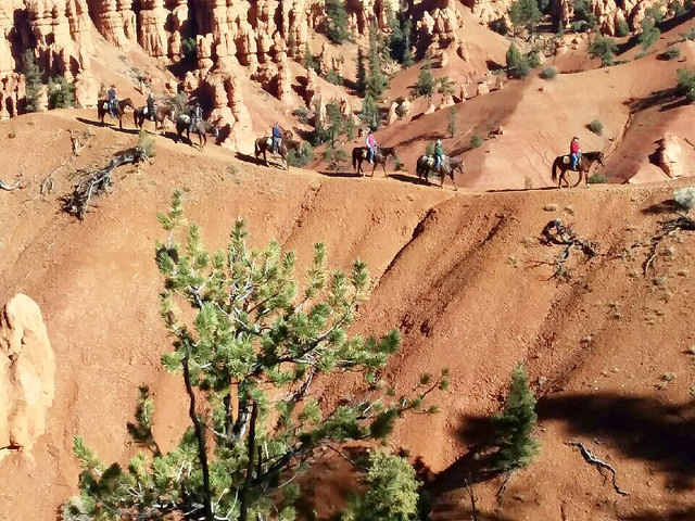 rubys horseback adventures, thunder mountain trail ride, horseback ride bryce canyon, southern utah