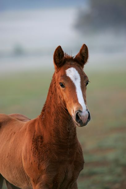 quarter horse foal, horse, bob langrish world of horses, 7 holiday gifts for horse lovers