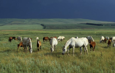 grazing horses, bob langrish world of horses