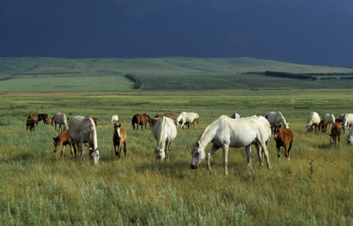 grazing horses, bob langrish world of horses