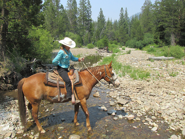 nancy brown, cowgirl, horseback riding alpine meadows, lake tahoe horse trail ride, because of horses