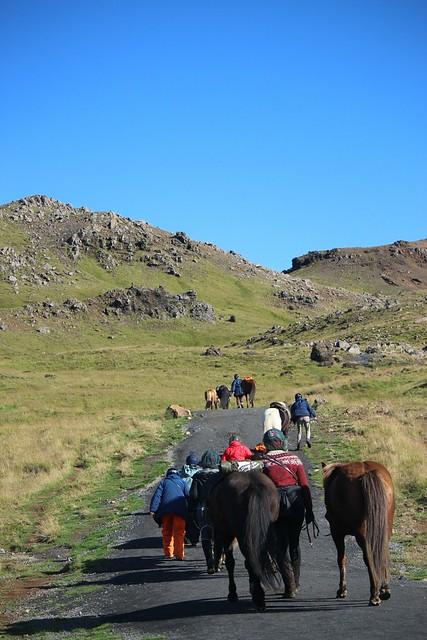 iceland by horse, equestrians walk horses, thingvellir national, icelandic horse park iceland