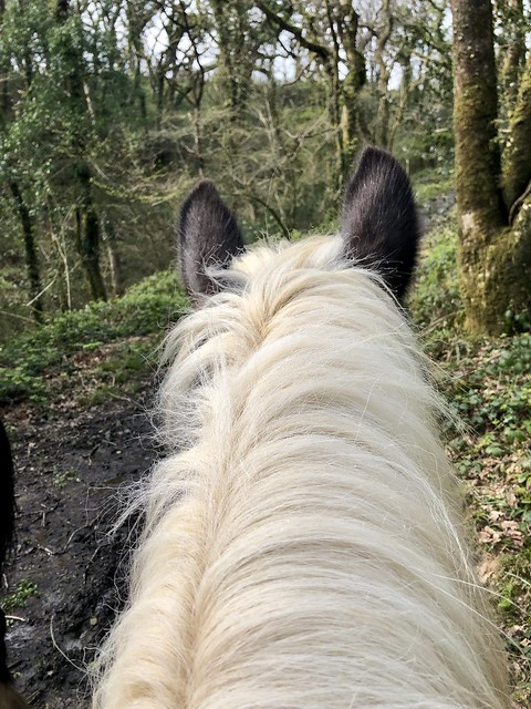 horse head standing in forest, gypsy cob mane with black ears, horse riding in carmarthenshire wales