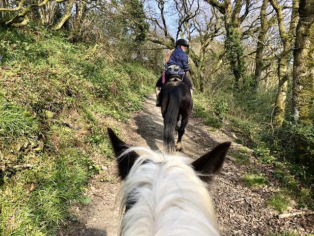 becki smith marros riding centre, woodland trek on horseback carmarthenshire wales