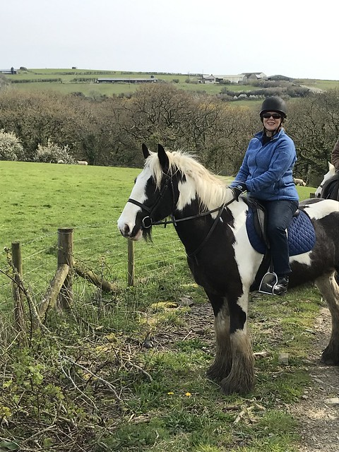 equestrian travel expert nancy d brown, gypsy vanner horse, horse riding in pembrokeshire wales