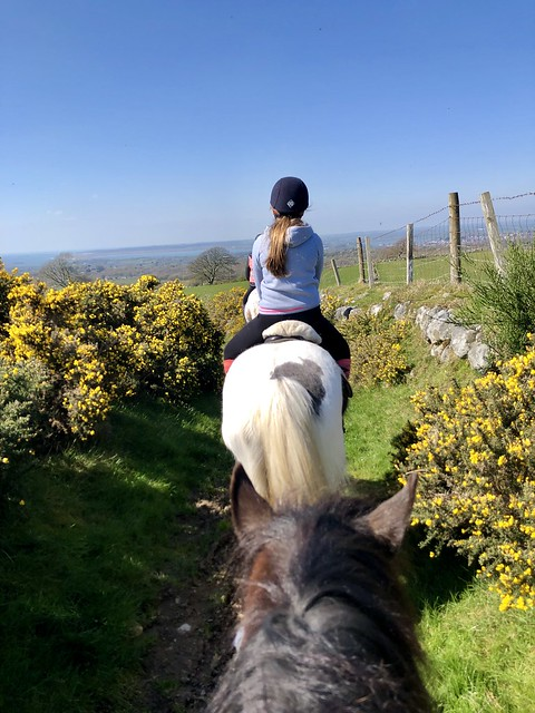 pony trekking, snowdonia national park horseback riding, snowdonia riding stables welsh cobb horse