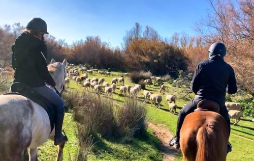 Riders encounter a herd of sheep in the Doñana National Park on their way to El Rocio